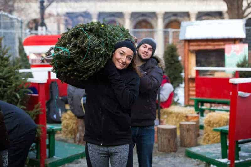buy-your-tree